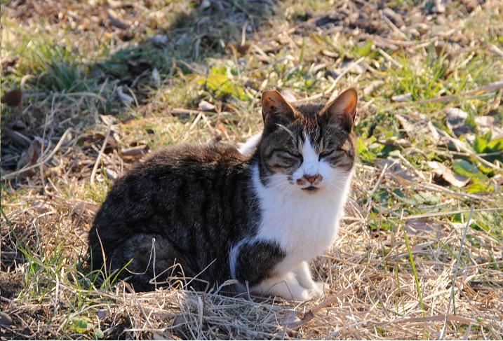 20100109猫2.jpg