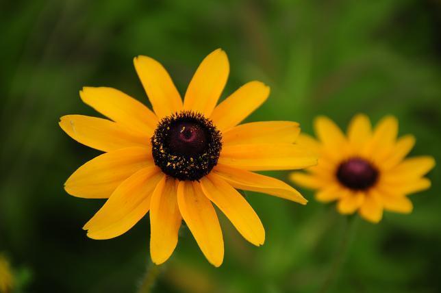 1 花.jpg