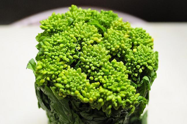 1 菜の花.jpg