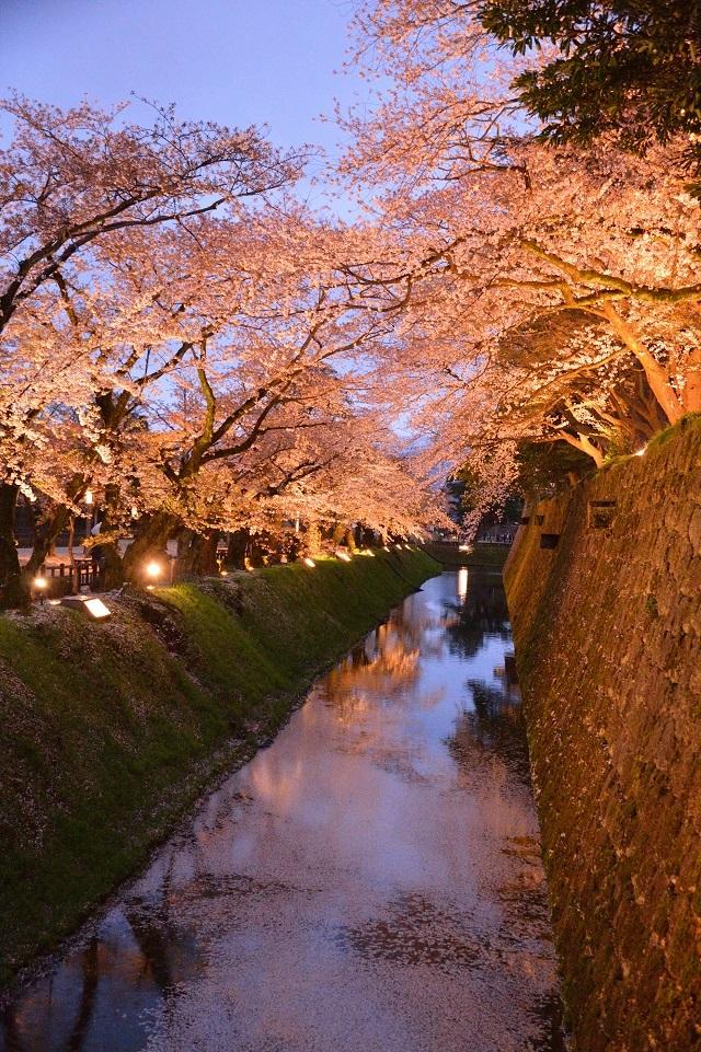 15金沢城の夜桜.jpg