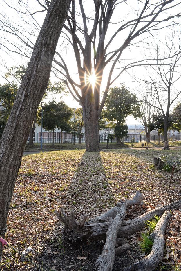 1日野市市民の森スポーツ公園.jpg