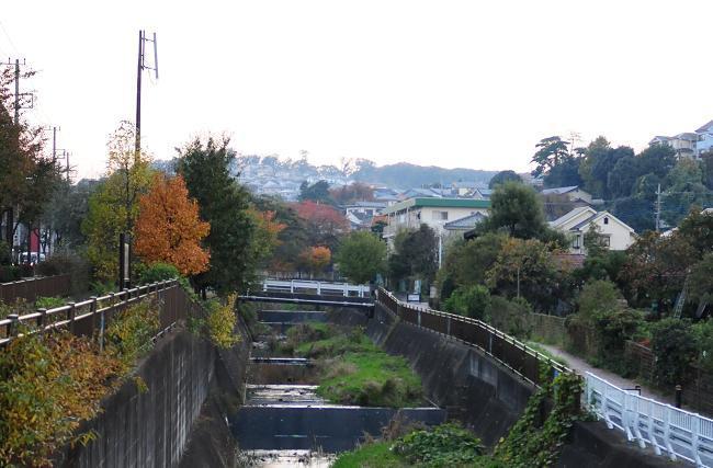 1程久保川の紅葉.jpg