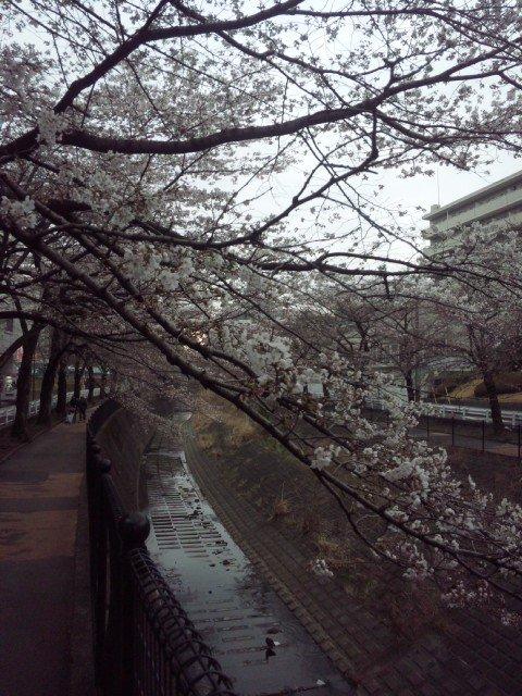 2011.04.03 1.jpg