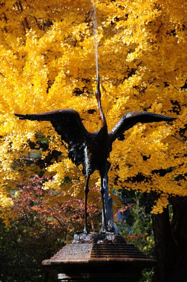 8雲形池の鶴.jpg