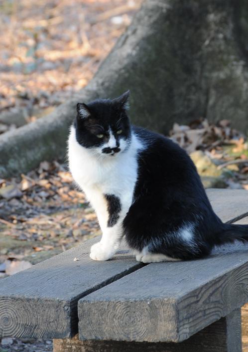 20100109猫.jpg