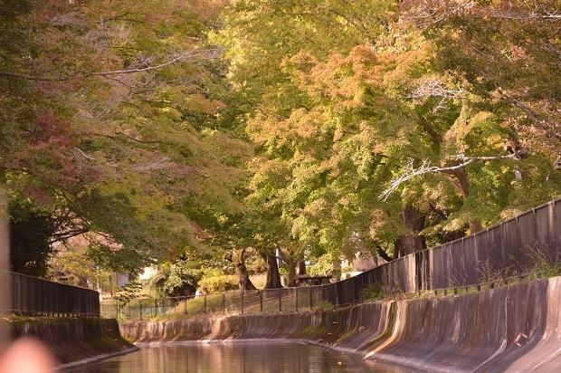 18琵琶湖疎水.jpg