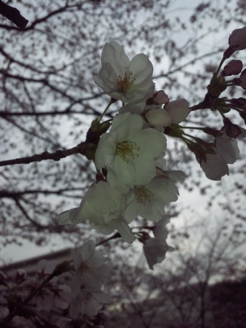 2011.04.03 2.jpg