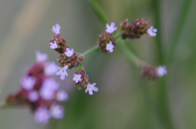 2 花.jpg