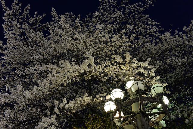 2四谷駅前の夜桜と四谷見附橋の照明.jpg