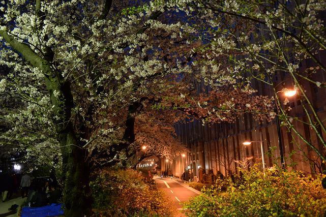 3四谷から市ヶ谷への外濠の公園の桜.jpg