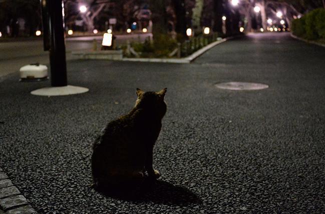 6上野公園.jpg