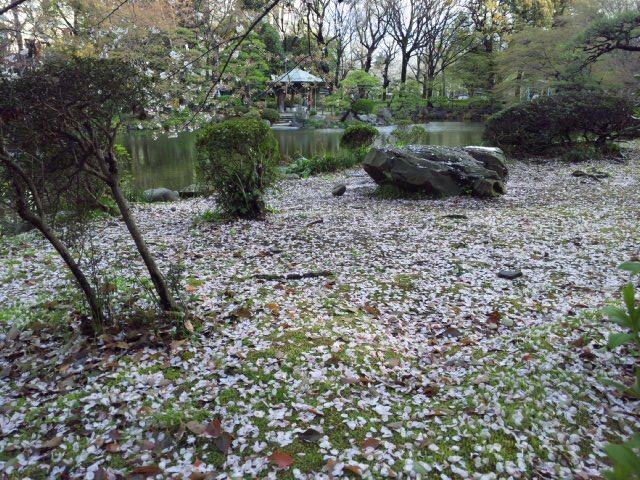 7日比谷公園 桜.jpg