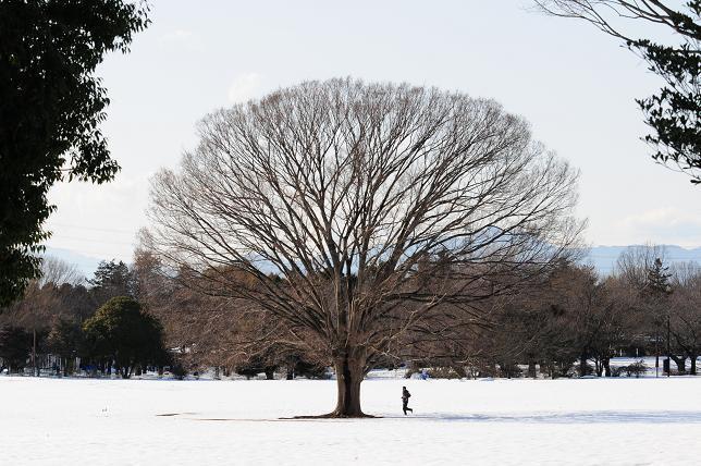 9昭和記念公園みんなの原っぱ.jpg